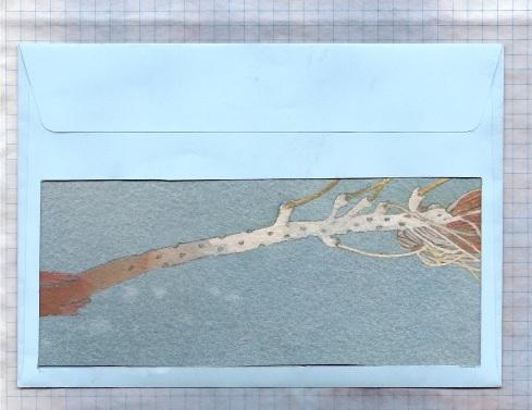grevillea branch