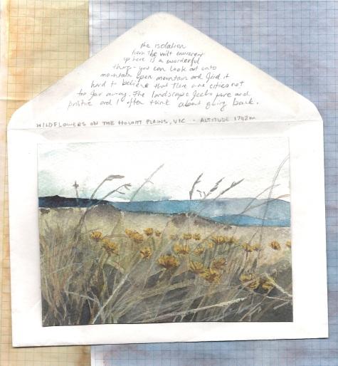 wildflowers on the howitt plains