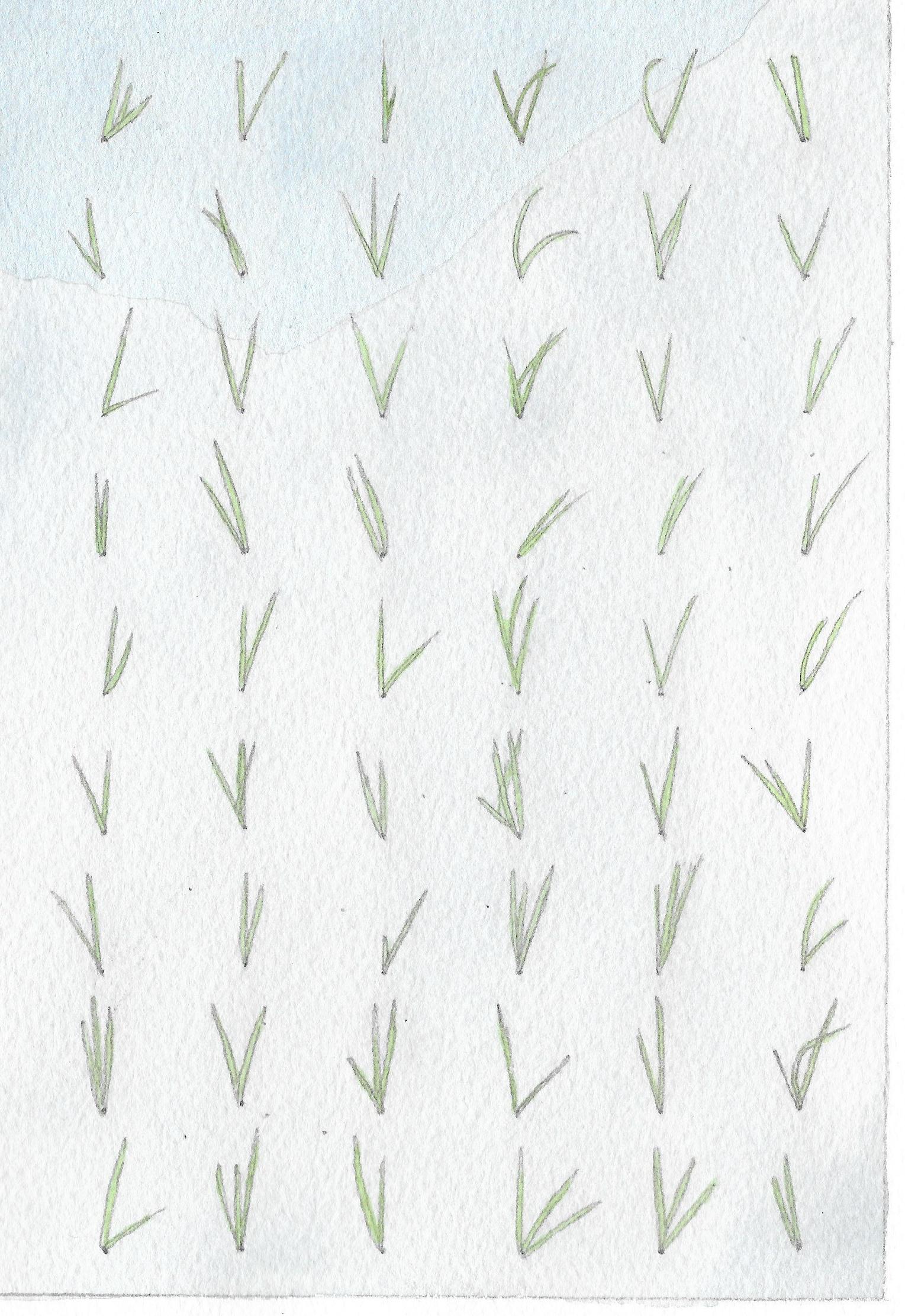 glasshouse-rice1.jpg