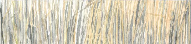 glasshouse wheat